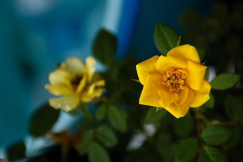 My garden 0097 October 16, 2010