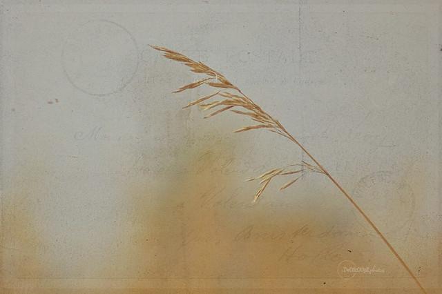 autumn grass 289/365