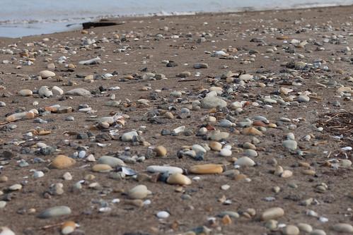 石ころだらけの砂浜