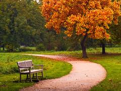 die Bank über einer Bank (~janne) Tags: autumn oktober tree berlin herbst bank olympus baum weg charlottenburg wetzlar leitz janusz summiluxr ziob
