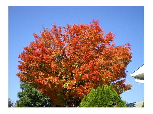 more fall foliage