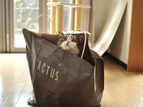 cute maru in a bag