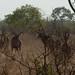 Africa_Botswana_Tsodilo_Caprivi (52 of 78)