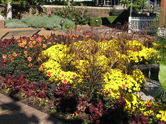 Dahlia, Chrysanthemum, Fountain Grass