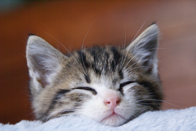 cute rescued kitten napping