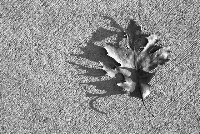 Sharp-edged shadow of a leaf.
