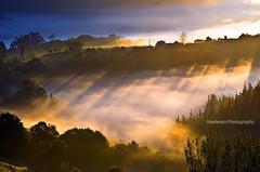 Amanece entre castaos (Rawlways) Tags: yellow sunrise nikon asturias paisaje piloa