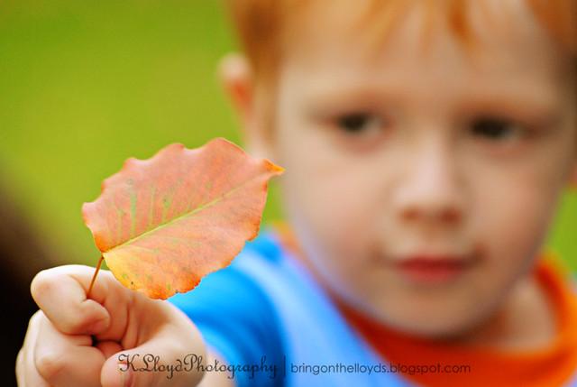 Breck-with-leaf--wm