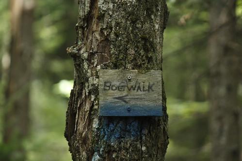 Willoughby Bog Hike (29)