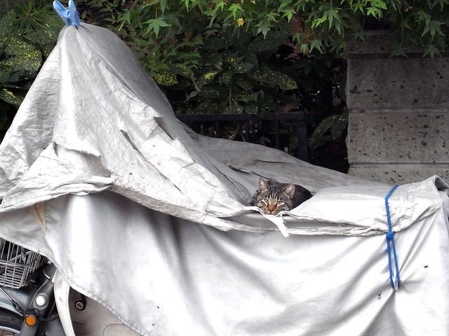 Today's Cat@2010-10-24