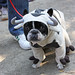 The 20th Annual Tompkins Square Halloween Dog Parade