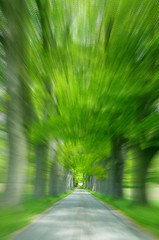 Lightspeed  Spring (Stanley Zimny (Thank You for 16 Million views)) Tags: road park trees green spring seasons path nj skylands fleursetnature 100commentgroup