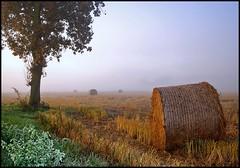 Fog (alfvet) Tags: nikon campagna nebbia autunno vigevano valpadana theunforgettablepictures platinumheartaward tup2 veterinarifotografi virtualjourney sailsevenseas