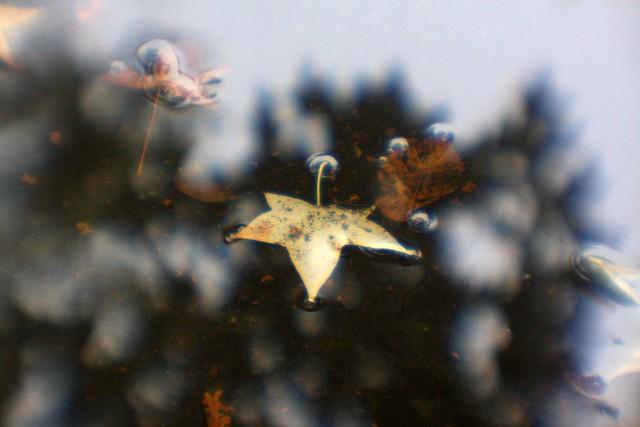 autumn, pettygrove park