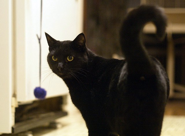 cute black rescued cat