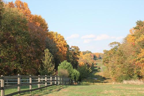 Autumn 2010 - 1