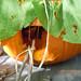 Lauren Roach Pumpkin Fairy House 3