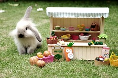 * for vegetarians and herbivores * (girl enchanted) Tags: baby rabbit bunny totoro angora babyrabbit babybunny mixrabbit