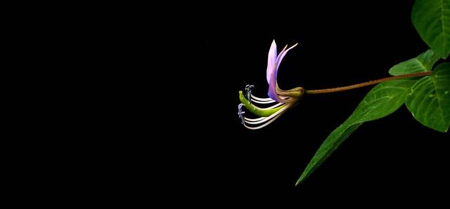 IMG_1226 Flower