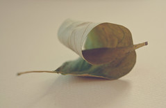 the curled leaf (greenicadesign) Tags: autumn green fall found leaf pastel curled dried