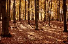 Jesień (gocha71) Tags: las autumn nature forest landscape poland polska jesień krajobrazy pejzaże kartpostal otfopole yourcountry
