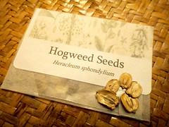Noma - Rene Redzepi Talk - Hogweed Seeds