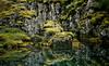 The land of the Saga (Jos Mecklenfeld) Tags: panorama lake reflection green film nature water mos iceland moss meer pentax natuur ishootfilm saga thingvellir þingvellir reflectie ijsland espio pentaxespio115g