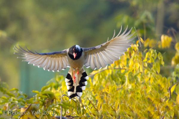 RYALE_Shaanxi_Birds_13