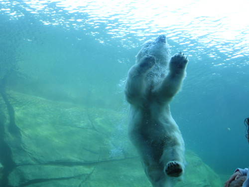 The polar bears were having a good day too