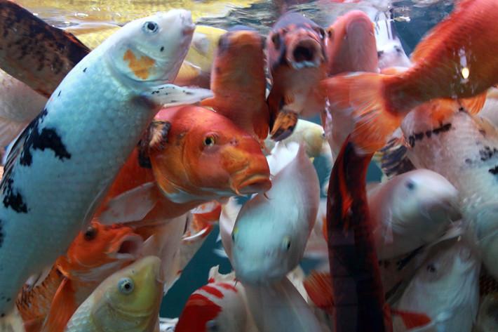 110710_fish