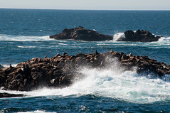 Sea Lion Rocks Photo