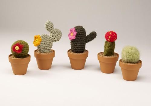 cacti_a435-670x468