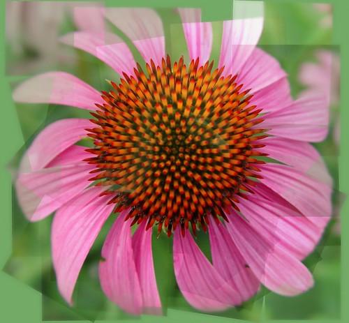 Pano-Flower