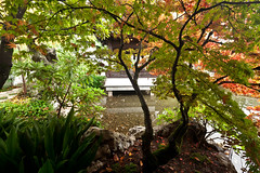 Japanese Maple over Pond (absencesix) Tags: travel november trees sky plants usa nature leaves rain weather oregon portland iso100 quiet unitedstates peaceful calm noflash japanesemaple northamerica brightcolors chinesegarden 16mm cultural locations 2010 manualmode 1635mm canoneos1dsmarkii asianculture portlandoregonusa camera:make=canon exif:make=canon exif:iso_speed=100 geo:city=portland geo:state=oregon overcastcloudy hasmetastyletag adjectivesfeelingdescription selfrating3stars exif:focal_length=16mm 2010travel 32secatf11 geo:countrys=usa lansuchinesegardens exif:lens=160350mm exif:model=canoneos1dsmarkii camera:model=canoneos1dsmarkii exif:aperture=11 subjectdistanceunknown oregon1112201011152010 november142010 geo:lon=122672581 geo:lat=4552555 45313198n122402129w