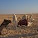 camel photoshoot