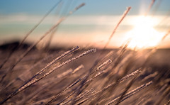 //// (Inglfur B) Tags: blue winter sunset sky cloud sun blur cold ice nature grass clouds out island lights frozen photo iceland focus dof bokeh dusk picture peaceful outoffocus gras sland mynd ogni dgun inglfur  fkus gni inglfurb ingolfurb bjargmundsson