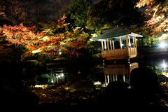 (turntable00000) Tags: park reflection japan photography tokyo pond turntable ogikubo 365  takashi    suginami  kitajima   turntable00000 otaguro  20101128