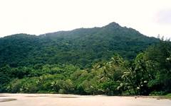 2001 Australia: Daintree Rainforest Mangrove #1 (dominotic) Tags: 2001 trees nature river bank australia mangrove qld cairns daintreeriver tropicalrainforest biologicaldiversity farnorthqueensland thedaintreerainforest saltwaterandfreshwatermarinelife