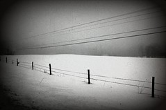 Fences in the snow- Holga-ish (Emily Taliaferro Prince) Tags: winter snow holga snowwinterwhitefencevermontfarmcountryside