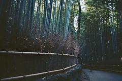 Deep into the Bamboo forest (kenzodiazepine) Tags: film kyoto kodak bamboo contax arashiyama t2 ektar kodakektar100