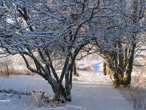 vinter 109