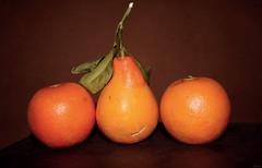 Orange Pear (P A H L A V A N) Tags: orange persian iran n gaz r pear iranian pars irani farsi fars daregaz dareh  dargaz
