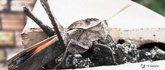 Rider (TK °) Tags: macro insect inseto beautifulmonsters tktkdesignerdesignertiagoferminotiagoferminokokimototiagokokimotopoaportoalegrebrasilbrazil