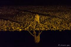 Giraffe 4403 (Ursula in Aus - Travelling) Tags: africa etosha etoshanationalpark namibia waterhole afterdark night lowlight nightlights giraffe