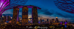 Garden View (The Happy Traveller) Tags: gardensbythebay singapore singaporeskyline sunset dusk