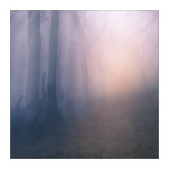 Parting 3 (gerainte1) Tags: icm trees colour woodland woods