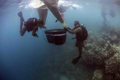 Sailors help repair a damaged coral reef in Apra Harbor.