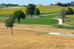 Marche landscape (giorgiorodano46) Tags: giugno2017 june 2017 giorgiorodano marche italy campagna countryside campi meadows serradeconti summer