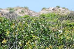 Wet desert (cristianhr10) Tags: green dunes shrubbery sand sky valencia
