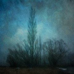 Winter morning (borealnz) Tags: blue trees winter newzealand mist snow cold texture fog square poplar canterbury nz mackenziecountry gloom willows atmospheric tekapo barebranches bsquare flypapertextures borealnz